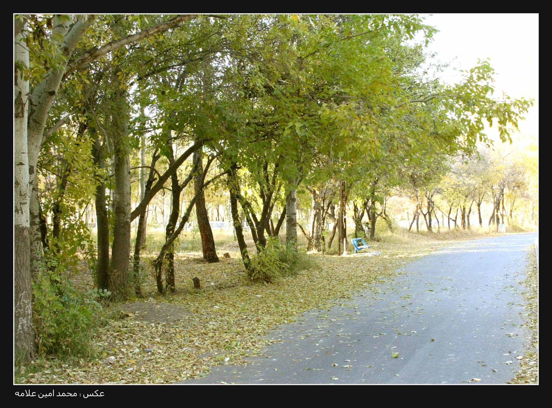 پارک جنگلي فريمان - محمد امين علامه